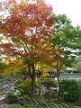 日本庭園・清池軒