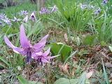 歩道から花のアップを撮影