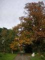 Kew Garden 紅葉