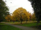 Kew Garden 黄色の紅葉