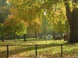 ロンドンの紅葉
