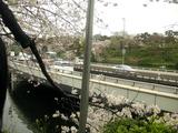 千鳥ヶ淵から首都高速都心環状線