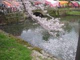 お堀と桜の花びら