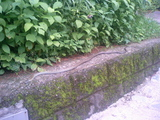 草津温泉で見たヘビ