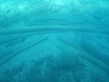 支笏湖の湖底に眠る流木